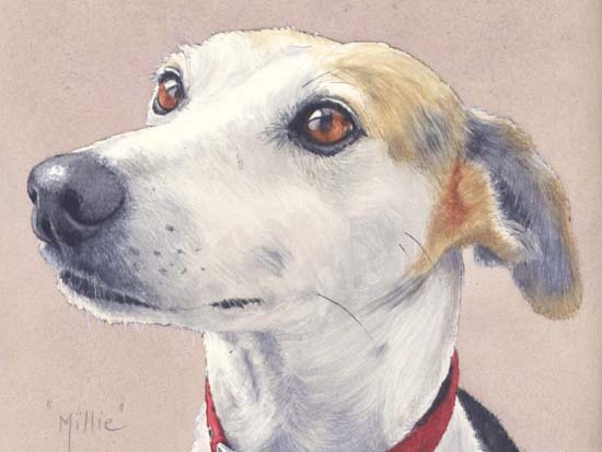 Millie - watercolour110514